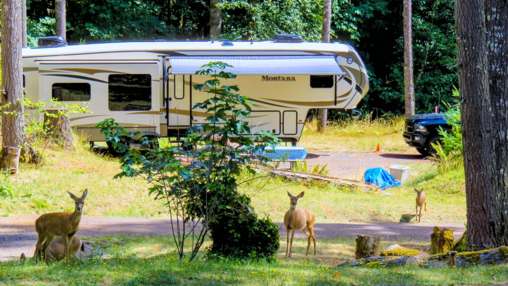 Wild on the go full time rv living wild on the go for Minimalist living in an rv