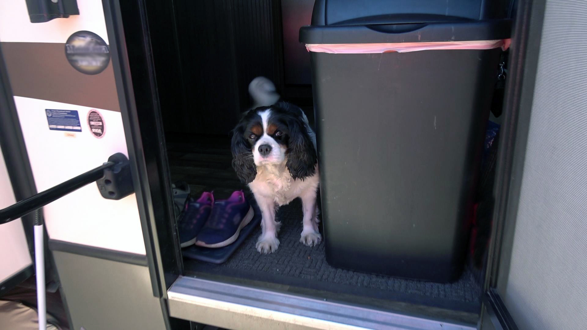 Leaving Barkley in the RV